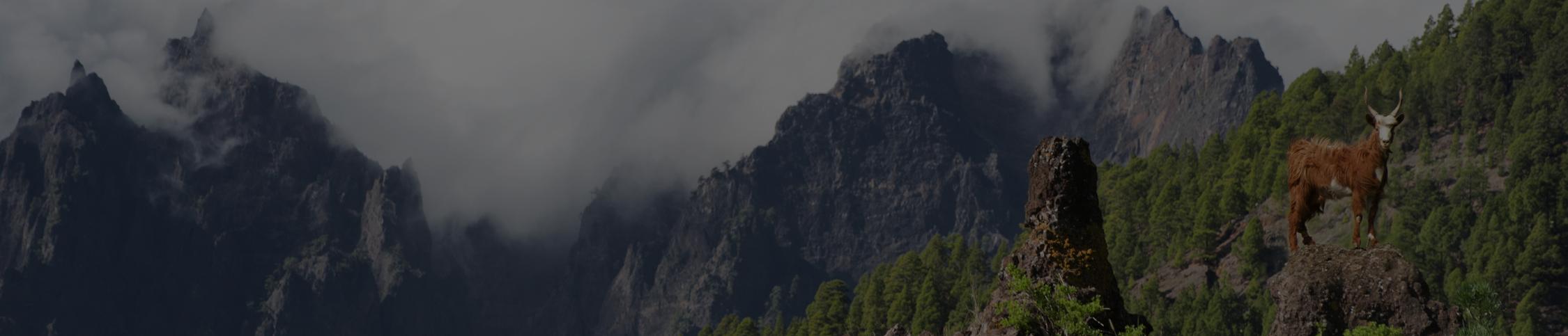 Firmado un convenio de colaboración científica entre el Instituto Regional de Investigación y Desarrollo Agroalimentario y Forestal de Castilla-La Mancha y la Asociación Nacional de Criadores de Ganado Caprino de Raza Negra Serrana